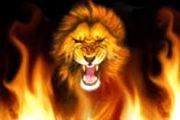 CHRONIQUE DU MARDI : LES LIONS ……INDOMPTABLES CONTRE LES AUTRES….LIONS